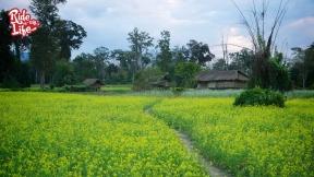 tribal-farmland